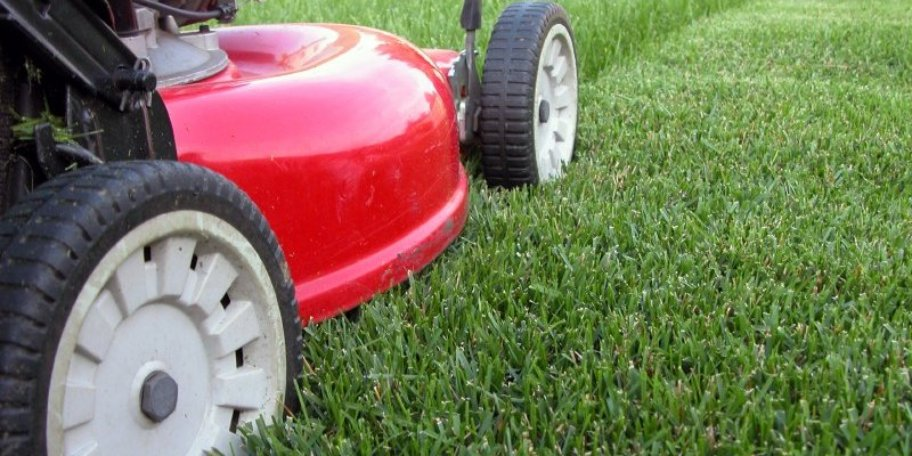 Maintaining Your New Lawn Bos Sod